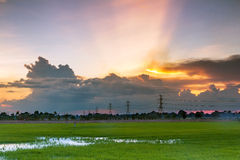 Beautiful sunset with rice field Stock Photo
