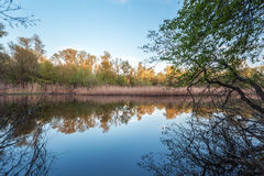 Beautiful sunset on the river in forest with sky reflection Royalty Free Stock Photo