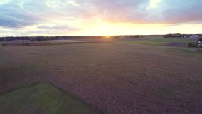 Beautiful sunset at rye field. Low altitude flight. Aerial footage. stock video
