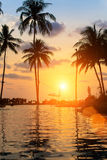 Beautiful sunset on sea beach with palm tree. Nature. Stock Images
