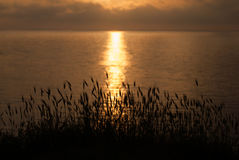 Beautiful sunset on the sea with grass and ears in the foreground Royalty Free Stock Photos