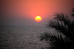 Beautiful sunset on the sea in a tropical country. The sun shines through the leaves of a palm tree. Royalty Free Stock Image