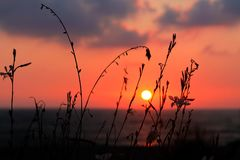 Beautiful sunset at the seashore. Grass in the foreground. Setting sun above sea. Sunset background stock photo
