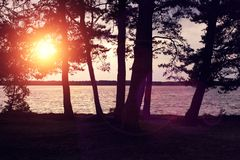 Sunset on the lake. Beautiful sunset seen through pine trees over a lake Royalty Free Stock Photo