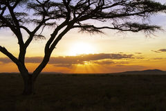 Beautiful sunset in Serengeti Africa Stock Photo