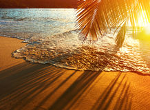 Beautiful sunset at Seychelles beach with palm tree shadow Royalty Free Stock Photography