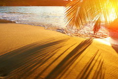 Beautiful sunset at Seychelles beach with palm tree shadow. Over sand Stock Photography