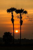 Beautiful sunset and silhouette palm tree on twilight time Stock Photos