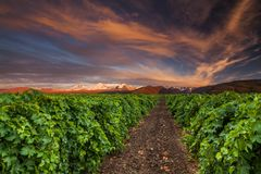 Beautiful sunset sky over a vineyard in the mountains Stock Photos