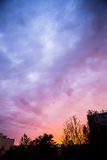 Beautiful sunset sky and tree silhouettes Stock Images
