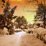 Beautiful sunset in snowy woods Royalty Free Stock Photography