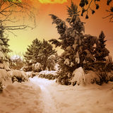 Beautiful sunset in snowy woods Royalty Free Stock Photos