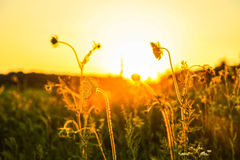 Beautiful sunset. Spotted in Ukraine Royalty Free Stock Photography
