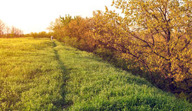 Beautiful sunset. Spring landscape with man on the field Stock Photos