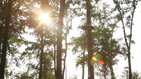 Beautiful sunset in the summer park stock video footage