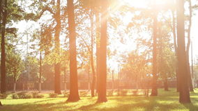 Beautiful sunset in the summer park stock footage