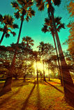 Beautiful sunset with sun beams at tropical park Stock Images