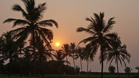 Beautiful sunset sun setting behind palm trees , Timelapse.  stock footage