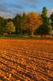 Beautiful sunset time at the farm Stock Image