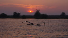 Beautiful sunset landscape - Danube Delta, landmark attraction in Romania. Danube River stock video