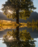 Beautiful sunset, tre reflected in still waters of lake.  Royalty Free Stock Photo