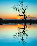 Beautiful sunset, tre reflected in still waters of lake.  Royalty Free Stock Images