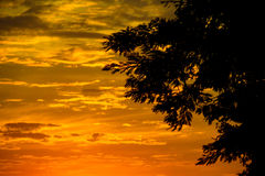 Beautiful sunset and tree Stock Images