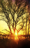 Beautiful sunset, trees in meadow, landscape against sun Stock Photo