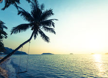 Beautiful sunset on a tropical beach, palm tree with a swing. Travel. Stock Image