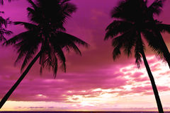 Beautiful sunset at tropical beach with palm trees Royalty Free Stock Image