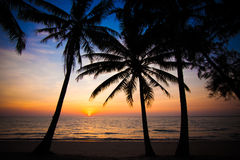 Beautiful sunset at tropical beach with palm trees Stock Photo