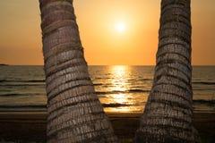 Beautiful sunset on a tropical beach Stock Photos