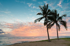 Beautiful sunset with two palm trees over the ocean horizon Stock Photos