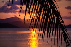 Beautiful sunset. View through palm leaf and on Royalty Free Stock Image