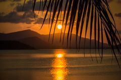 Beautiful sunset. View through palm leaf and on Stock Photos