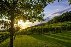 Beautiful sunset at the vineyard in Slovenia. Vipava valley region stock image
