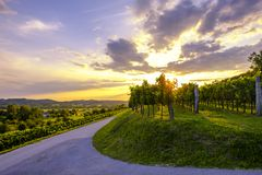 Beautiful sunset at vineyards of Vipava valley, Slovenia. Famous wine making region stock photography