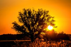 Beautiful sunset, warm summer evening on the edge of the forest are lonely trees stock photo