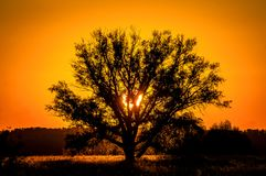 Beautiful sunset, warm summer evening on the edge of the forest are lonely trees. And the sun falls over the horizon royalty free stock photos