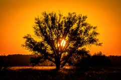 Free Beautiful Sunset, Warm Summer Evening On The Edge Of The Forest Are Lonely Trees Royalty Free Stock Images - 141254229