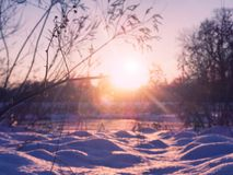 Beautiful sunset in the winter forest. Selective focus on branch with lens flare Stock Images