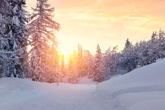 Beautiful sunset in winter forest Jluia Alps in Slovenia Stock Photos