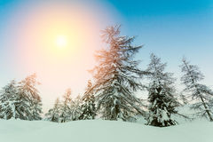 Beautiful sunset in winter forest Jluia Alps in Slovenia Stock Photo