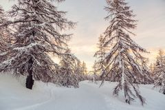 Beautiful sunset in winter forest Jluia Alps in Slovenia. Europe Royalty Free Stock Photos