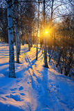 Beautiful sunset in a winter park Stock Photos