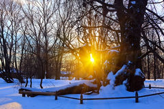 Beautiful sunset in a winter park. Russia Stock Photography