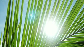 Beautiful sunshine through palm leaves with sun background with lens flare effects in slow motion. 1920x1080 stock video