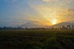 Beautiful sunshine and rice farm on morning time. Of thailand Stock Photography