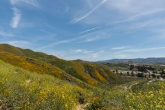 Beautiful superbloom vista in the Walker Canyon mountain range near Lake Elsinore. Southern California, with slopes covered in wild poppies stock images