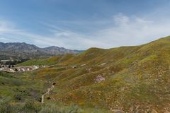 Beautiful superbloom vista in the Walker Canyon mountain range near Lake Elsinore. Southern California, with slopes covered in wild poppies royalty free stock photography